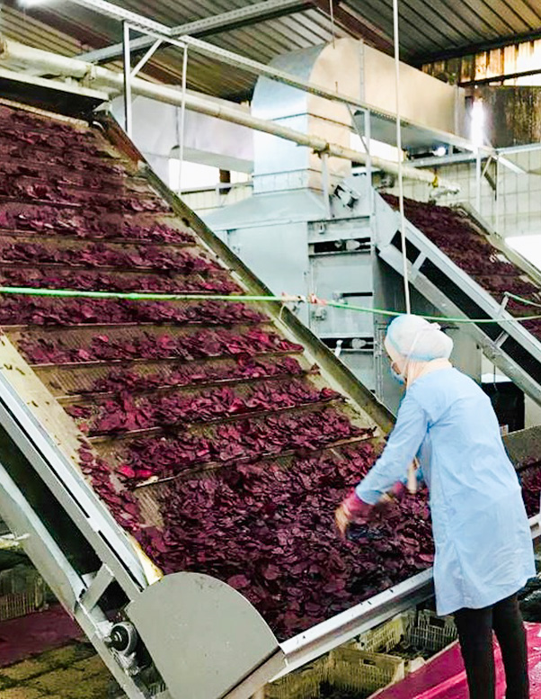Beetroo manufacture